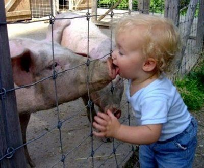 Young Toddler Boy kissing a pig